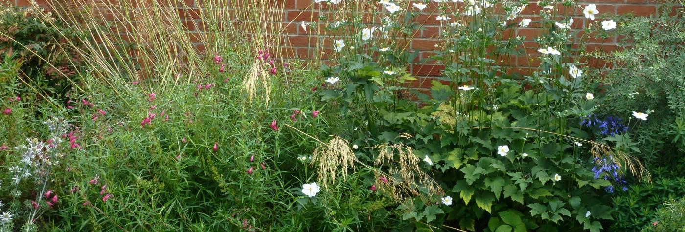 Linacre garden border
