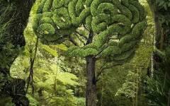 forest brain