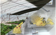 a greenhouse using low density polyethylene (LDPE) in China; plastic toys and packages in Japan